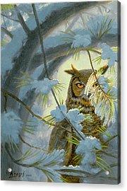 Watchful Eye-owl Acrylic Print by Paul Krapf