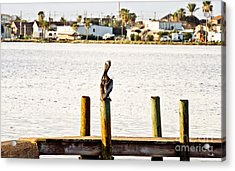 Watching Over The Bay Acrylic Print by Scott Pellegrin
