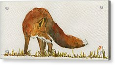 Watching Red Fox Acrylic Print by Juan  Bosco