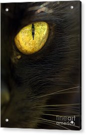 Watching You Acrylic Print by Anne Gilbert