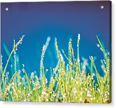 Water Droplets On Blades Of Grass Acrylic Print by Panoramic Images