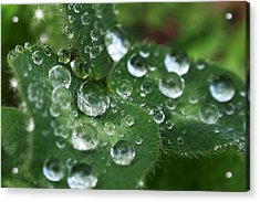 Water Drops On Green Clover Acrylic Print by Christina Rollo