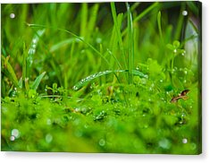Water Drops On The  Grass 0084 Acrylic Print by Terrence Downing