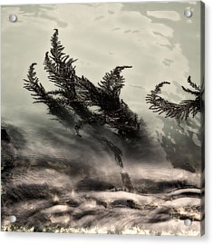 Water Fronds Acrylic Print by Dave Bowman
