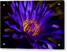 Water Lily 7 Acrylic Print by Julie Palencia