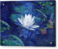 Water Lily Acrylic Print by Ann Powell