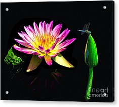 Water Lily Dragon Fly Acrylic Print by Nick Zelinsky