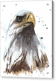 Watercolor Eagle Acrylic Print by Alison Fennell