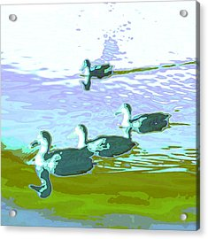 Waterfowl-abstract Acrylic Print by Tom Druin