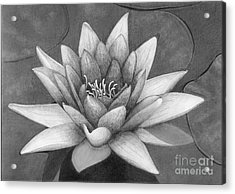 Waterlily Acrylic Print by Nicola Butt