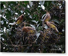 Wax Wings Supper  Acrylic Print by Skip Willits