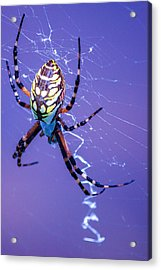 Web Browsing Acrylic Print by Lesley Brindley