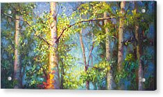 Welcome Home - Birch And Aspen Trees Acrylic Print by Talya Johnson