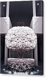 Welcome Tree Infrared Acrylic Print by Adam Romanowicz