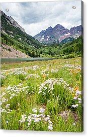 West Elk Wildflowers Acrylic Print by Adam Pender