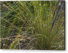 Wet Grass Acrylic Print by Juan  Silva