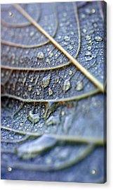 Wet Leaf Acrylic Print by Frank Tschakert