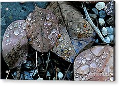 Wet Leaves Acrylic Print by Artist and Photographer Laura Wrede