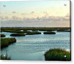 Wetlands Acrylic Print by Robert Brown