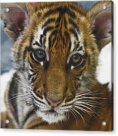 What A Face D3875 Acrylic Print by Wes and Dotty Weber