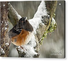 What Is This? Acrylic Print by Inge Riis McDonald