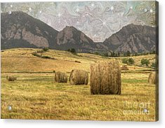 What The Hay Acrylic Print by Juli Scalzi