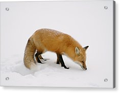 What Was That Acrylic Print by Sandra Updyke