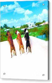 What's Out There  Acrylic Print by Javier Correa