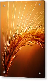 Wheat Close-up Acrylic Print by Johan Swanepoel