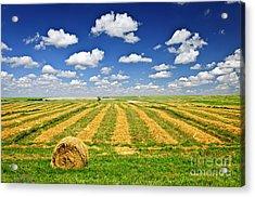 Wheat Farm Field And Hay Bales At Harvest In Saskatchewan Acrylic Print by Elena Elisseeva