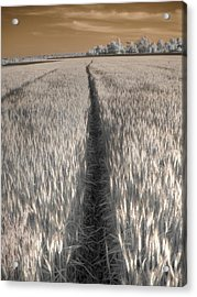 Wheat Field Acrylic Print by Jane Linders