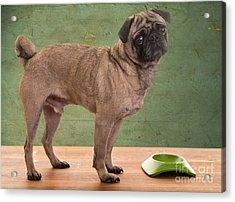 When Is Dinner? Acrylic Print by Edward Fielding