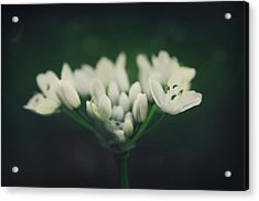 When Love Was Young And New Acrylic Print by Laurie Search