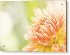 When Summer Dreams Acrylic Print by Beve Brown-Clark Photography