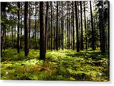 When The Forest Beckons Acrylic Print by Karen Wiles