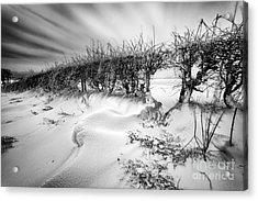 When The Wind Blows Acrylic Print by John Farnan