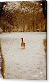 Where Is Everyone Acrylic Print by Jasna Buncic