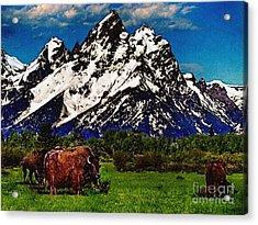 Where The Buffalo Roam Acrylic Print by Bob and Nadine Johnston