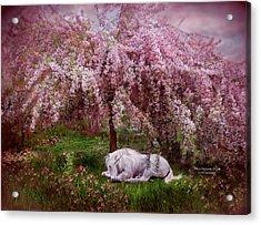 Where Unicorn's Dream Acrylic Print by Carol Cavalaris