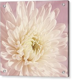 Whispering White Floral Acrylic Print by Kim Hojnacki