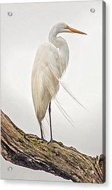 Whispering Wind Acrylic Print by Donnie Smith
