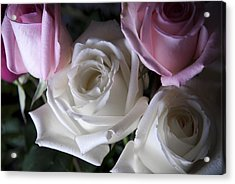 White And Pink Roses Acrylic Print by Jennifer Ancker