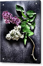 White And Purple Lilacs Acrylic Print by Marianna Mills