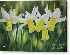 White And Yellow Daffodils Acrylic Print by Sharon Freeman
