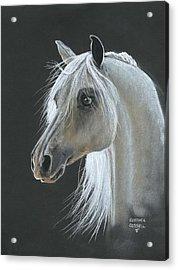 White Arabian Acrylic Print by Heather Gessell