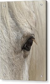 White Beauty D1412 Acrylic Print by Wes and Dotty Weber