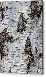 White Birch Abstract  Acrylic Print by Heidi Smith