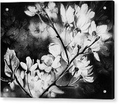 White Blossom Acrylic Print by Natasha Denger