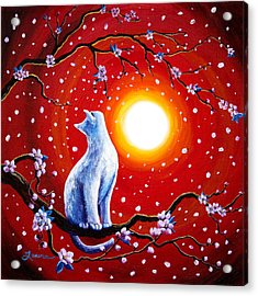 White Cat In Bright Sunset Acrylic Print by Laura Iverson