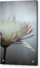 White Colors Acrylic Print by Kathy Williams-Walkup